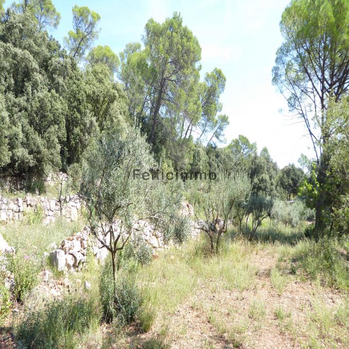 Offres de vente Terrain Mouans-Sartoux (06370)